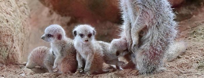 zoo lyon activite famille enfant